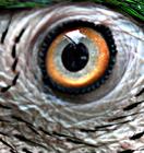 Eye_of_the_beholder