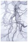 Layered_plexi_tree_roots_1__2008__40