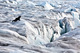 20110403073446-monacoglacier_2010