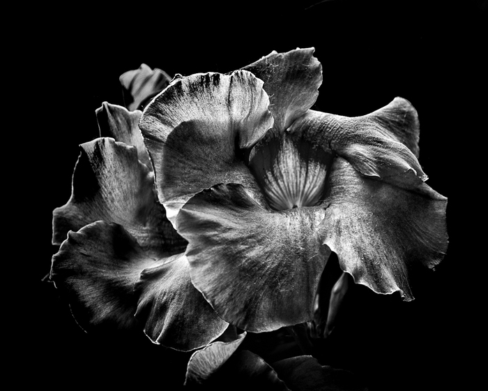 Backyard Flowers In Black And White No 2