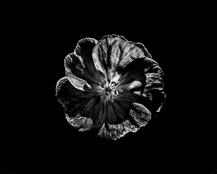Backyard Flowers In Black And White No 6