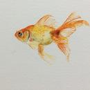 20160725072514-goldfish
