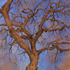20160816205402-tree96_72dpi