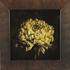 20161024155337-8_larger_chrysanthemum