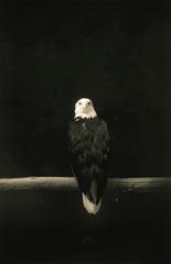 Untitled #1515, Yamamoto Masao