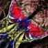 Butterlfly__15