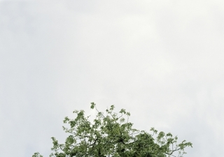 The Top of Anne Frank\'s Chestnut Tree, Amsterdam, 2008,Jason Lazarus