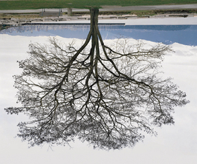 Jericho Beach Tree, Winter,Rodney Graham
