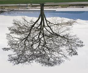 Jericho Beach Tree, Winter, Rodney Graham