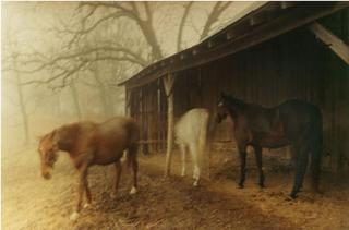 Horses at the Barn (from Nature Series), James Baker Hall