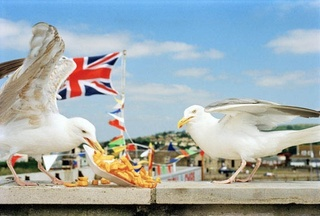 West Bay [seagulls eating chips], Martin Parr