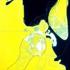 Suarez-_laself