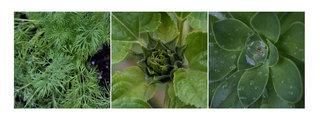 Green Triptych, Angela María Ortíz S.