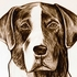 _praline___catahoula___graphite_on_white_paper__2005_by_antonio_rael__3sepia2