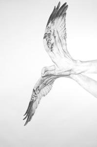Dana-harel_eagle_lg