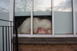 Maybe a Herm (installation view), Maria von Kohler