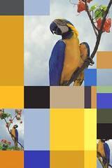 Parrot Color Chart 5, Sergio Vega