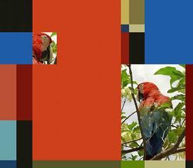 Parrot Color Chart 2, Sergio Vega