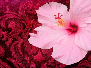 Burgundy_and_hibiscus