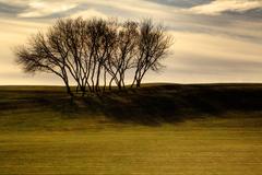 Tree-on-hill-01