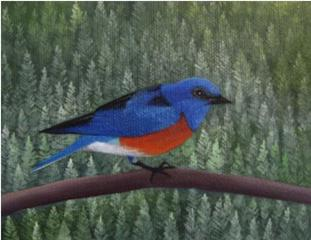 Forest bluebird, Astrid Preston