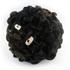 Blacknose