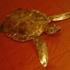 Turtle022