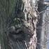 Spring-april_hsa2008_kallio_alppila_etc_206