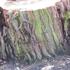 Spring-april_hsa2008_kallio_alppila_etc_185