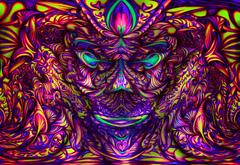 Houbova_hlava2