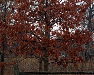 The Color of Winter-3623, Pauline Kochanski