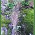 2008-augustglory-nature-igirex08_056
