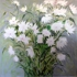48x48_big_white_movin_floral