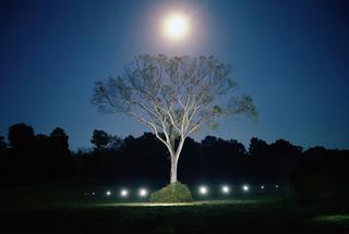 Shadowless Tree, Chad Kleitsch