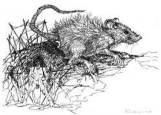 Year of the Rat,Kim Jones