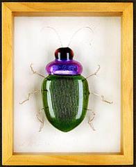 Beetle,