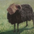 Gal_artist_82_3566_the-black-sheep-do