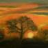 Desert_sunset_-_somewhere_in_rajasthan