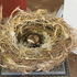 72cath_nest