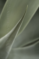 Agave II,James Wimberg