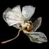 Phalaenopsis_6_1024w