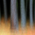 5_-_john_r_math_-_enchanted_forest_-_digital_image_-_2007__-_10_x_15_-_450