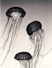 Jellyfish #9, CAMILLE SOLYAGUA