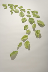Falling Leaves Green #4, Susan Longini