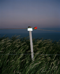 \'In Memory Of - 9\' from the project \'Beachy Head\', Wendy Pye