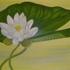 Floral_04-10