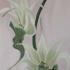 Orchide_05-1