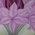 Floral_06-16