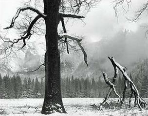 Black Oak, Fallen Branches, John Sexton