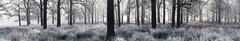 Dah_frozen_woods